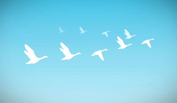 Preview thumbnail for video'Ask Smithsonian: Why Do Geese Fly in a V?