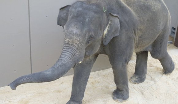 Preview thumbnail for video'Meet the Elephants