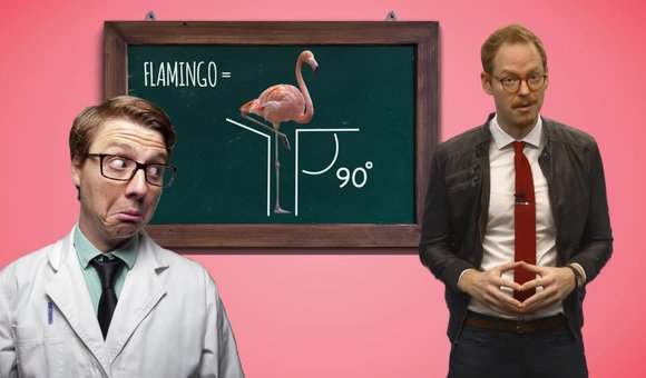 Preview thumbnail for video'Ask Smithsonian: Why Do Flamingos Stand on One Leg?