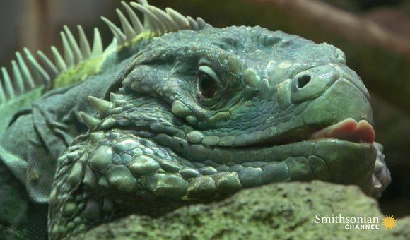 Preview thumbnail for video'Wild Inside the National Zoo: Reptile Rejuvenation