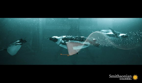 Preview thumbnail for video'What Ultra High Speed Penguin Footage Reveals About Pliosaurus