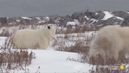 The Risky Way a Polar Bear Attack Victim Confronts Her Fear