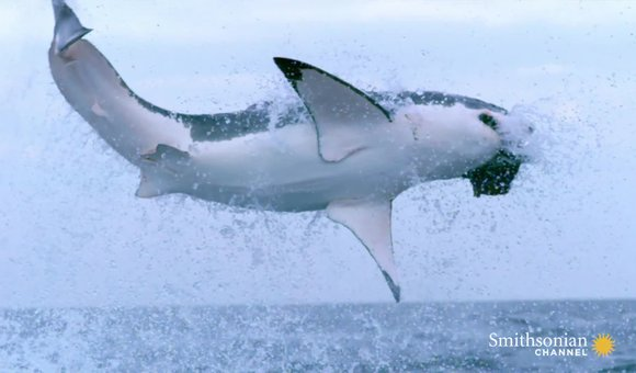 Preview thumbnail for video'The Secret of a Shark's Eyes